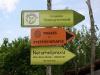 Heilweide- Naturheilpraxis Brandstetter