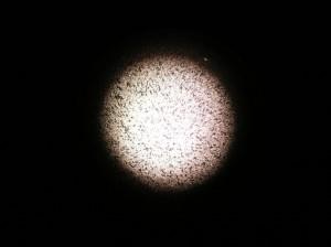 Lichtfleck in der Dunkelfeld Ansicht mit dem 10 x Objektiv