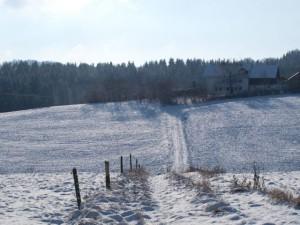 Heilweide im Winter