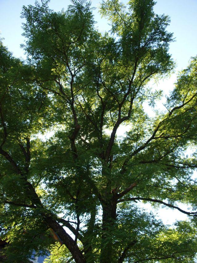 Heilweide Praxisbaum